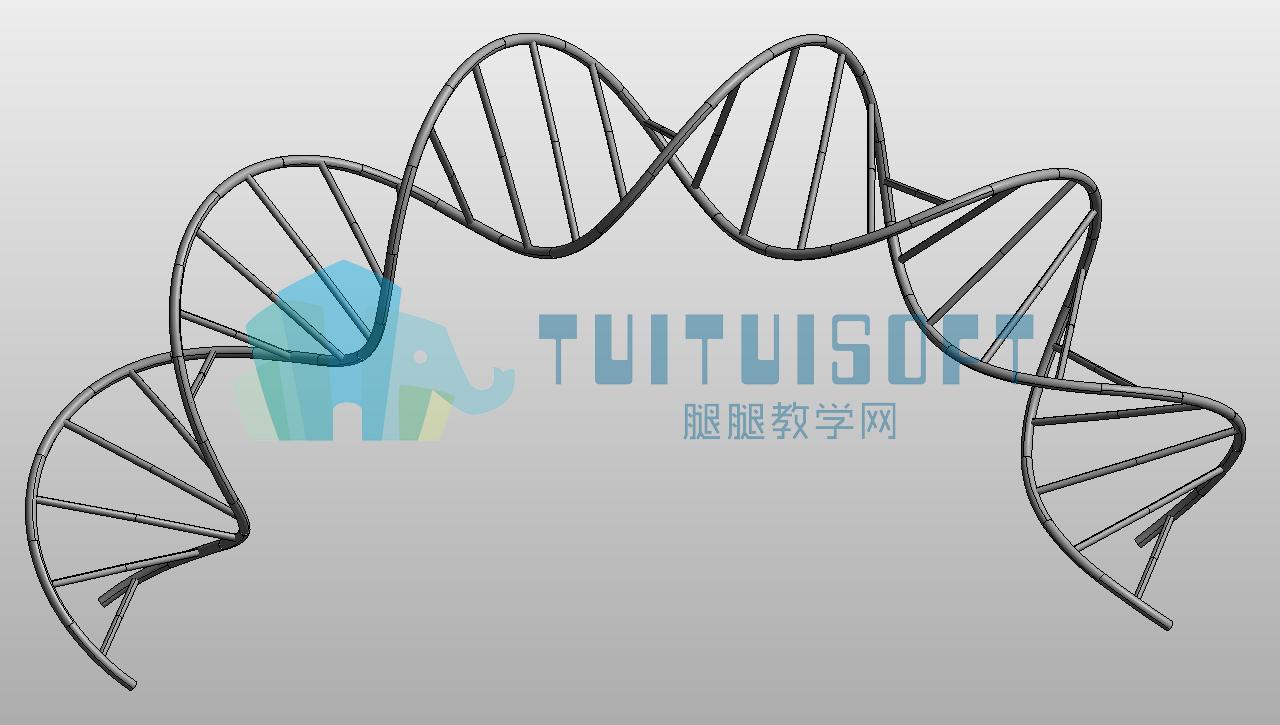 01 创建DNA模型(带水印).png